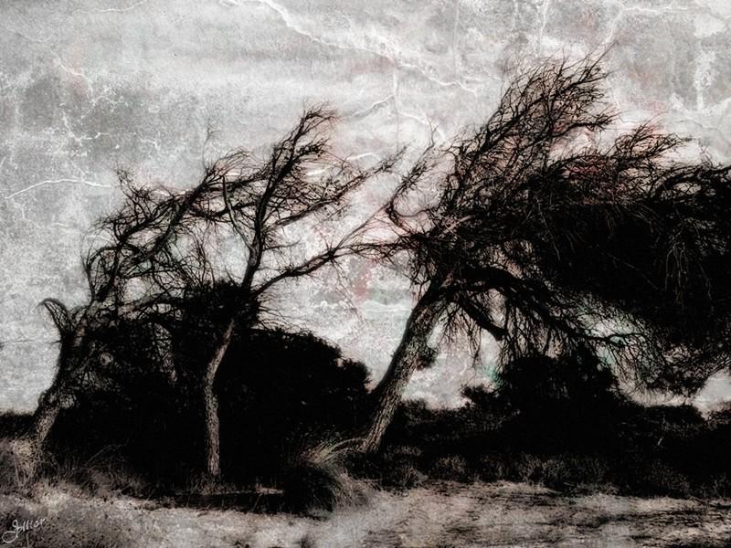 La soledad del poeta©