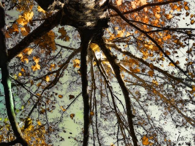 De vidas, sombras e instantes